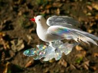 dove-gg-press-kit