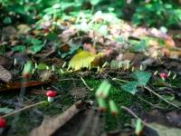 mushroom-gg-press-kitjpg