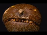 gourd_1